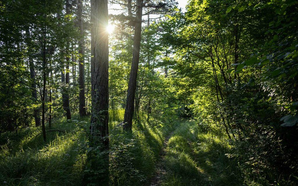 Foto de un bosque